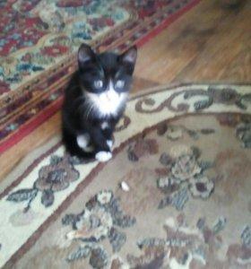 Котёнок чёрно-белого цвета. Родился 7 мая.