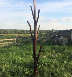 Вешалка из ствола березы