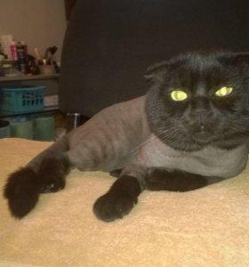 Стрижка кошек с выездом на дом