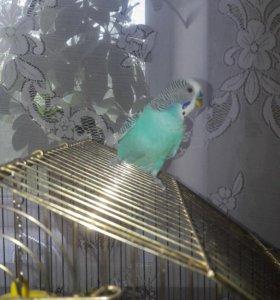 Попугай Кузя