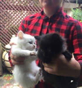 Милашки котята
