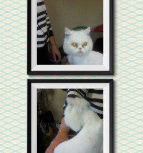 Стрижка , гигиена собак и кошек