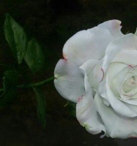 Розы. ручная работа