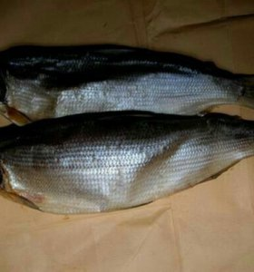 Вяленная рыба (сырок,сарога)