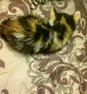 Котёнок Майя.