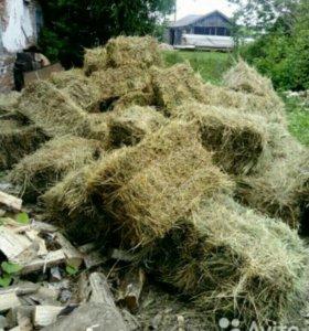 Продаеться сено в тюках