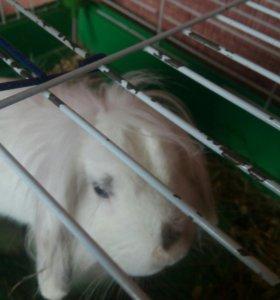 Кролик(декоротивный) с клеткой и поилкой