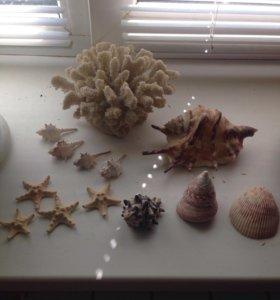 Ракушки коралл