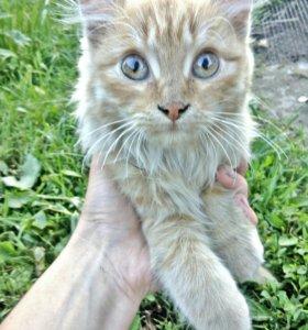 Котик очень милый и красивый