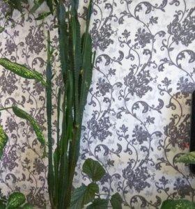Детка гигантского кактуса