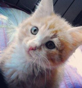 кот мальчик около 2 месяцев