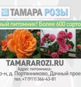 ТАМАРА РОЗЫ. ru