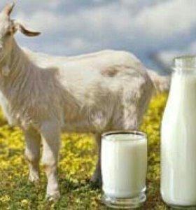 Молоко козье