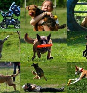 Профессиональная дрессировка собак всех пород