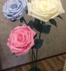 Ростовые розы, фотозона