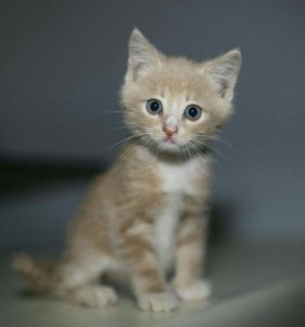 Котенок мальчик 2 месяца даром в добрые руки