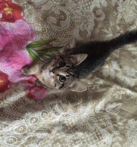 Котёнок (кошка)