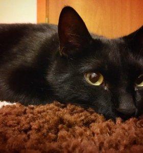 Котик 1,5 года