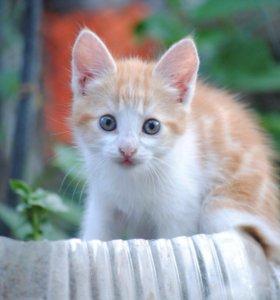 Котята-мышеловы