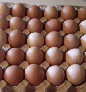 Деревенские продукты, куры, колбасы, сметана, яйца