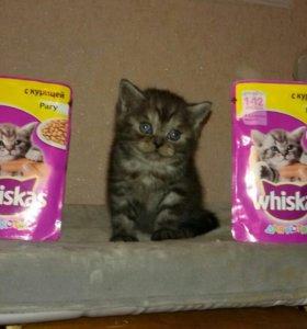 Продам плюшевого котенка