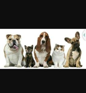 Передержка собак на дому