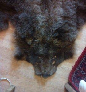 Ковёр шкура бурого медведя
