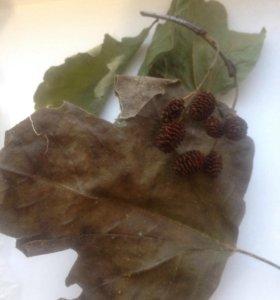 Листья для аквариума