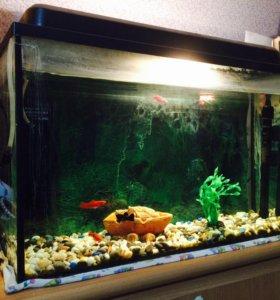 Аквариум с рыбками 50 л