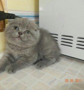 Котик в голубой шубке