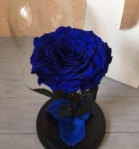 Роза в колбе. Синяя