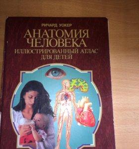 Анатомия человека книга энциклопедия