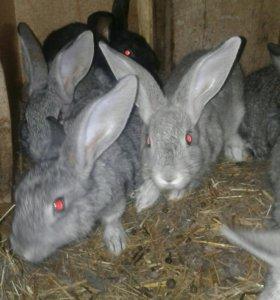 Кролики продаются