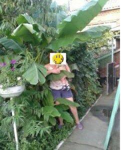 Продам отростки банана