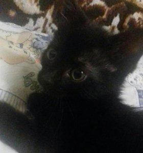 Котята черные