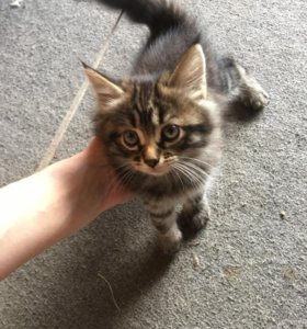 Котята ) отдадим в добрые руки