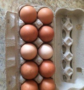 Продаётся домашние яйца