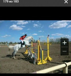 Обучение верховой езде. Конный спорт.