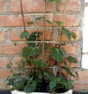 Комнатный сад 7 видов растений