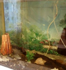 Продаю аквариум 128 л с рыбками