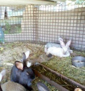Кролики 2-5 месяцев