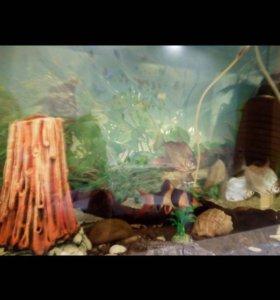 Аквариум 128 л с рыбками