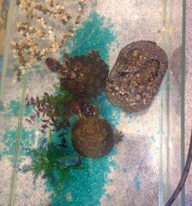 Две красноухие черепахи со всем оборудованием