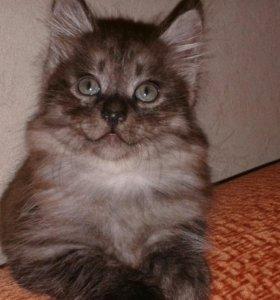 Алиментный котенок