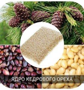 Ядро Кедрового Орех