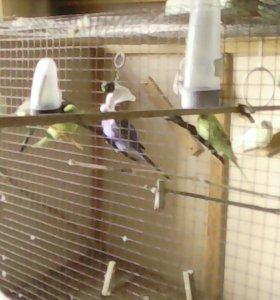 Вальер,3 клетки 3 гнезда 12 попугаев