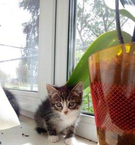 Очень красивые котята даром
