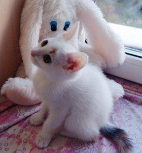 Кошечка-Кнопочка ищет дом