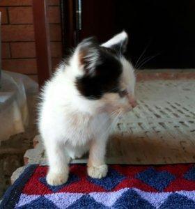 Ласковый котик мальчик