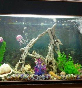 Оборудованный аквариум